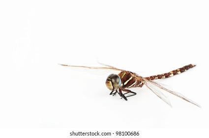 dragon fly on white