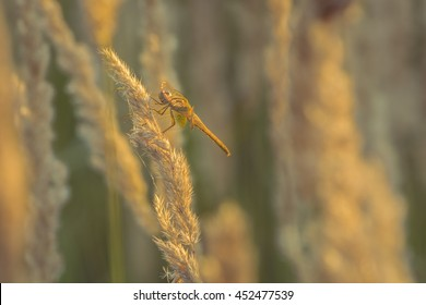 Dragon fly. Dragon fly sit on a stick.