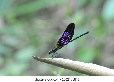 Dragonflies damselfly sitting on the stalk