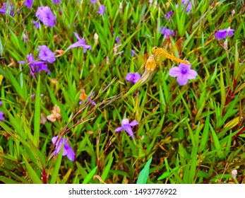 Dragonflies perched on purple flowers