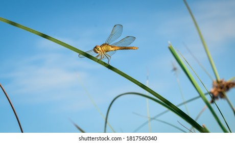 Dragonflies perching on leaves. dragonfly in nature. Dragonflies in natural habitats. Beautiful natural scenery with dragonflies.
