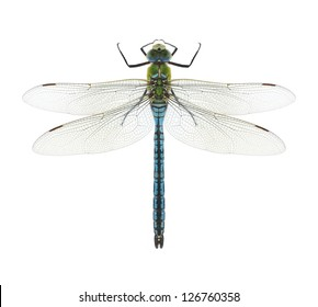 Dragonfly Anax imperator (male) Blue Emperor on a white background