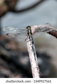 dragonfly animals in the wild