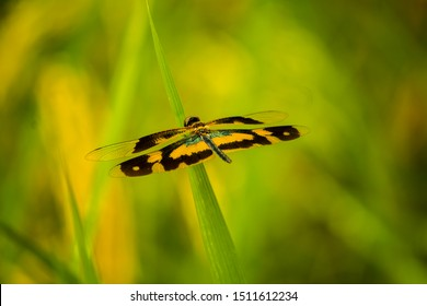 Dragonfly. Beautiful dragonfly. This is different types of dragonfly.