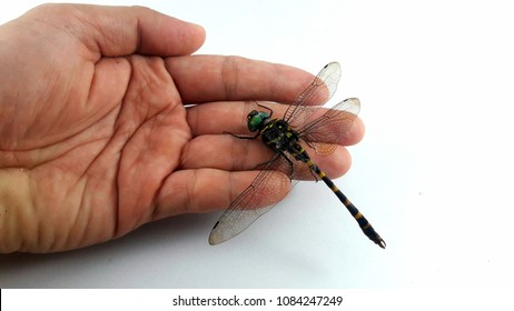Dragonfly bite hand in white background.