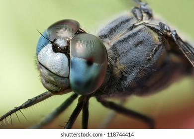 Dragonfly - blue