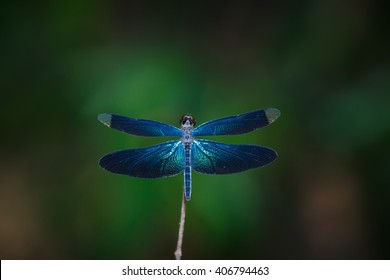 Dragonfly, dragonfly , blue dragonflies, insects, nature.