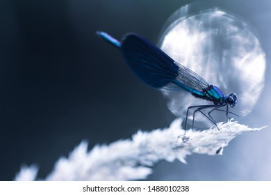 Dragonfly by a lake in blue color.