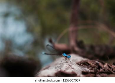Dragonfly in Cameron Park, Waco Tx