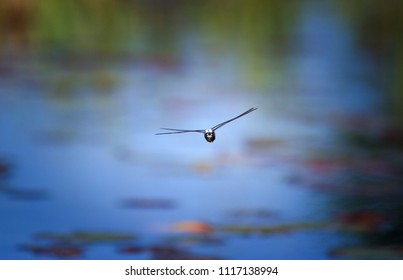 Dragonfly Captured In Flight