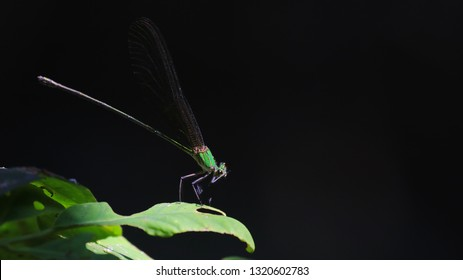 A Dragonfly  catching leaf of tree