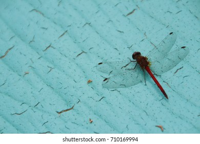 Dragonfly with Clear See-Through Wings and a Red and Black Body on a Teal Blue Crackled Background