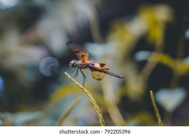 A dragonfly close up side view