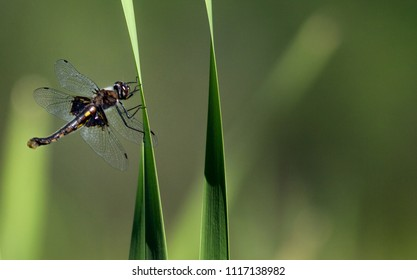 Dragonfly Closeup Beauty