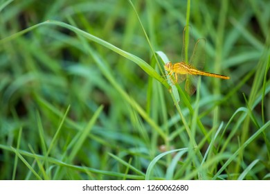 dragonfly and dew on the grass