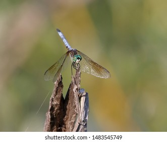 A dragonfly at the edge of the river.