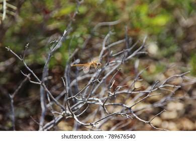 A dragonfly, Elba, Italy