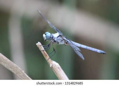 dragonfly fall water