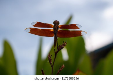 The dragonfly flies to glide.