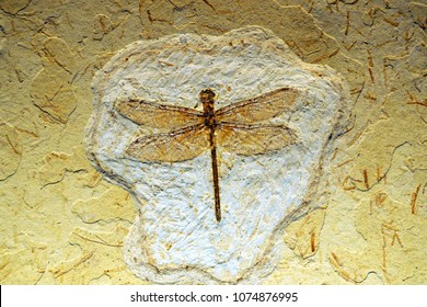 Dragonfly Fossils in layers pattern