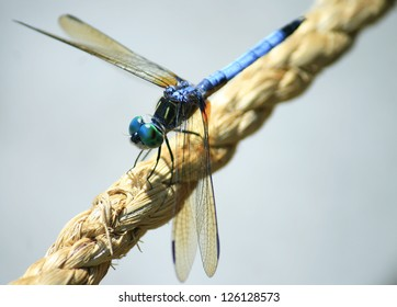 Dragonfly at the Gardens