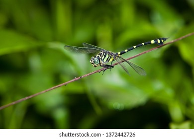 dragonfly green leaf