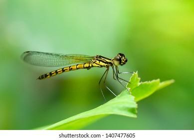 Dragonfly in green nature garden.