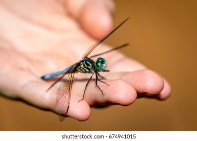 Dragonfly in the hand
