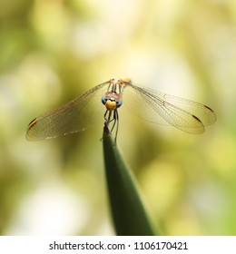The dragonfly is held by the paws behind the tip of the sharp leaf