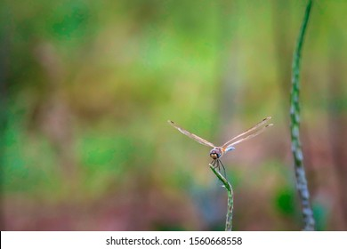 Dragonfly hold on dry branches and copy space .Dragonfly in the nature. Dragonfly in the nature habitat. Beautiful nature scene with dragonfly outdoor.a background wallpaper.The concept for writing