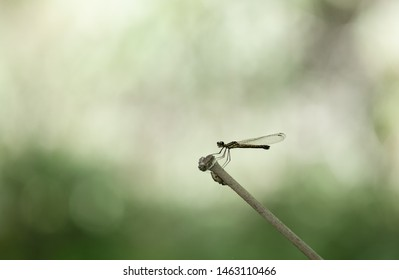 Dragonfly hold on dry branchesand copy space