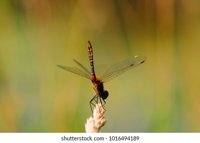 dragonfly insect background color