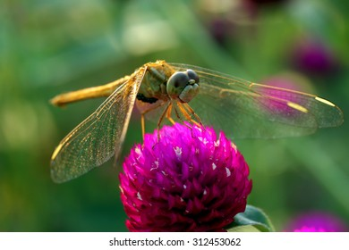 dragonfly is landing on flower in blurry background