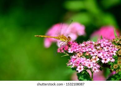 Dragonfly landing on purple flower