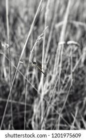 dragonfly life. sammer