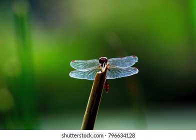 Dragonfly in light