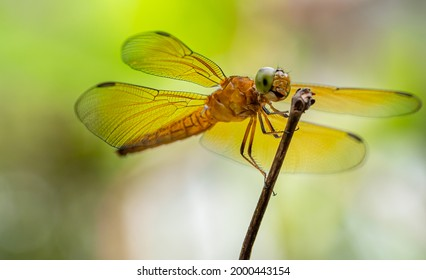dragonfly in natural habitat with stick tree