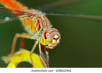 A Dragonfly in nature