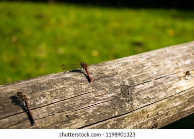 Dragonfly in nature close up