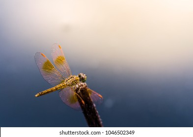 Dragonfly in the nature. Dragonfly in the nature habitat. Beautiful vintage nature scene with dragonfly outdoor