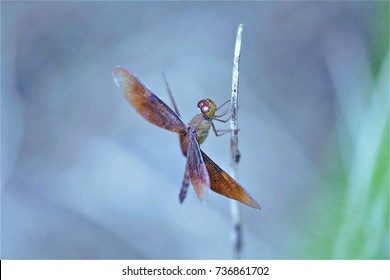 Dragonfly on the background blur