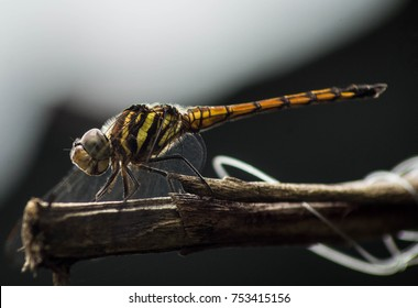 dragonfly on the branches