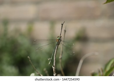 A dragonfly on a bush