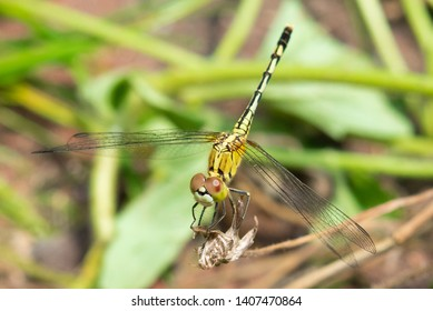 Dragonfly on dried flower in the nature.