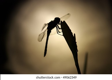 Dragonfly on the flower in moonlight