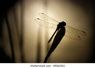 Dragonfly on the flower in night