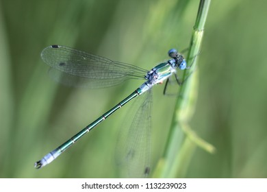 dragonfly on the grass close-up