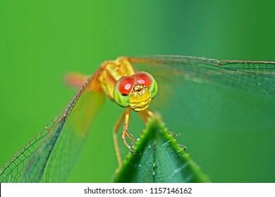 A Dragonfly on leaf