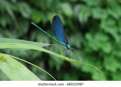 Dragonfly on the leaves