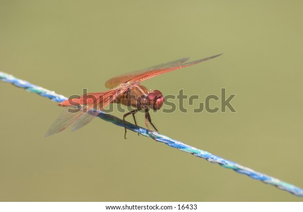 Dragonfly on a line